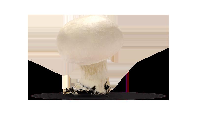 Champignon o Prataiolo bianco