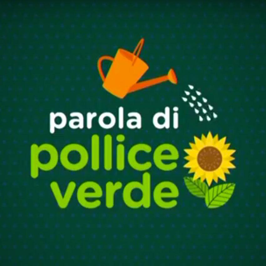 Fungo Italiano Certificato da Luca Sardella a