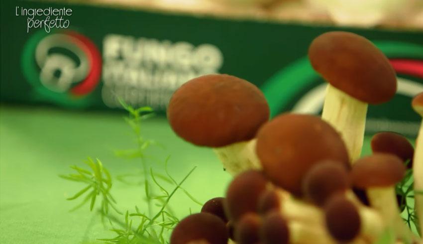 L'ingrediente perfetto: il fungo italiano coltivato
